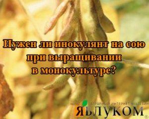 Нужен ли инокулянт на сою при выращивании в монокультуре?