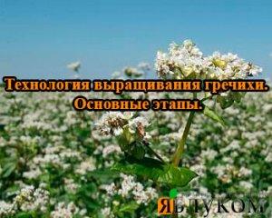 Технология выращивания гречихи. Основные этапы.