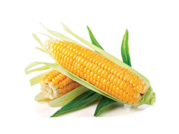Семена кукурузы Мрия МС