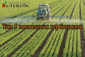 Топ 5 почвенных гербицидов
