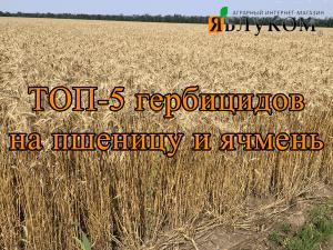 ТОП-5 гербицидов на пшеницу и ямень
