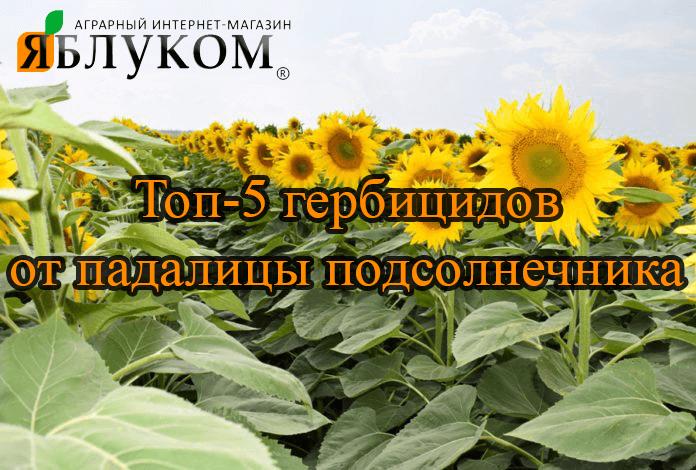 ТОП-5 гербицидов от падалицы химических подсолнечников