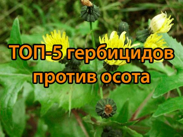 ТОП-5 гербицидов против осота