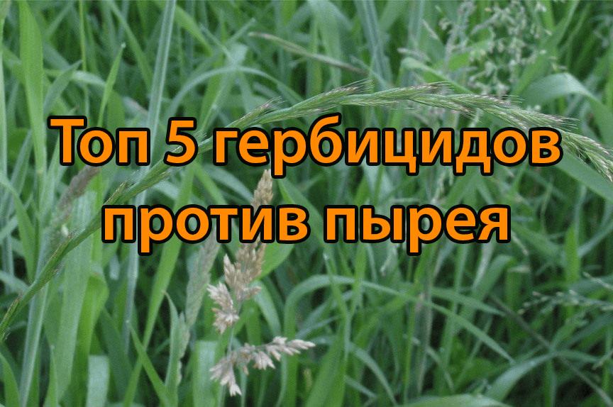 ТОП-5 гербицидов против пырея