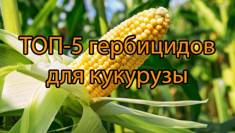 ТОП-5 гербицидов для кукурузы