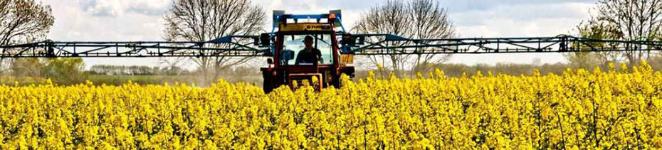 Купить семена озимого рапса в Украине, фото 1 - Яблуком