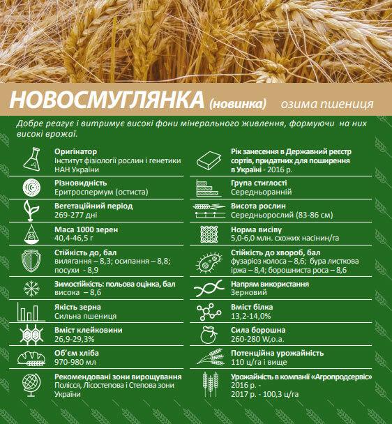 Семена озимой пшеницы Новосмуглянка
