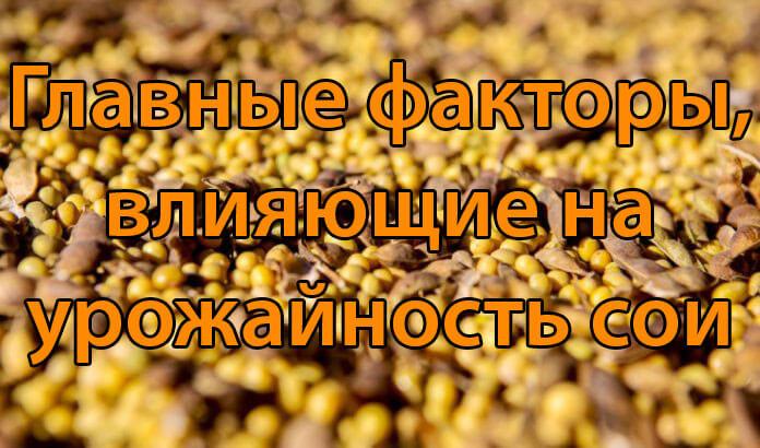 Главные факторы, влияющие на урожайность сои (1 часть)