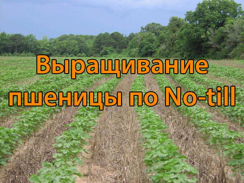 Выращивание пшеницы по No-till (ноутил)
