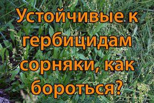 Устойчивые к гербицидам сорняки, как бороться?