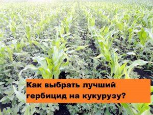 Как выбрать лучший гербицид для кукурузы?