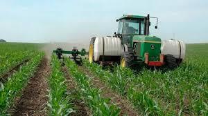 Подкормка кукурузы по листу – что важно знать каждому фермеру