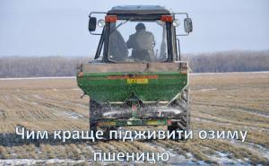 Что лучше для весенней подкормки пшеницы?